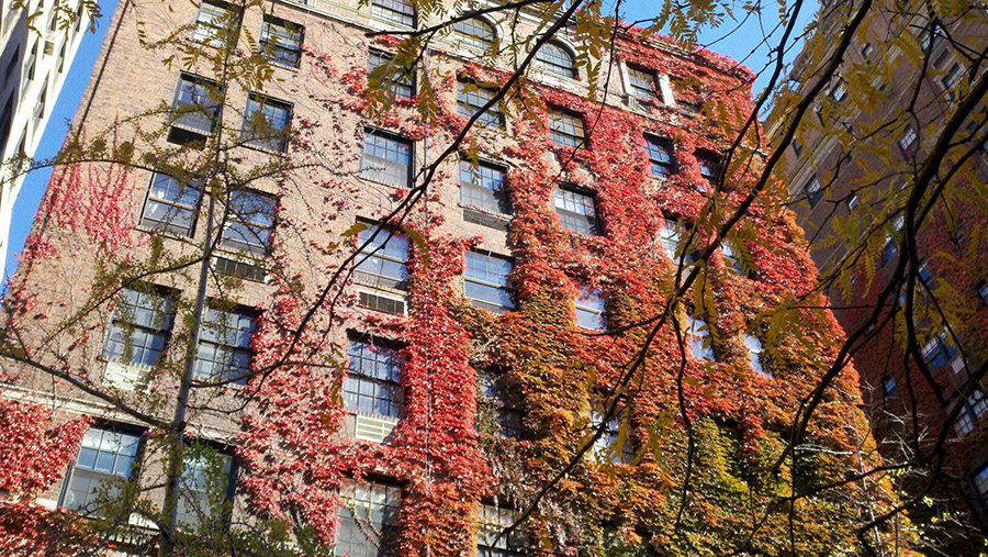fall foliage nyc